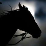 horsemoon11