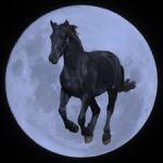 moonhhorse5