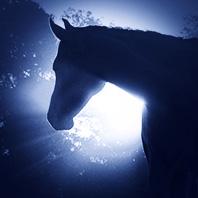 horse_198x198