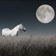 moon 888